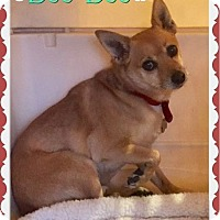 Adopt A Pet :: Boo Boo - Scottsdale, AZ