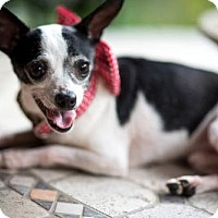Adopt A Pet :: Tiny Tim - Lafayette, LA