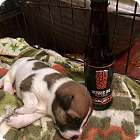 Adopt A Pet :: Mosaic - Dallas, TX