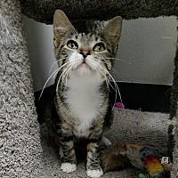 Adopt A Pet :: Freddie - Chaska, MN