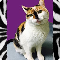 Adopt A Pet :: Lola - Jackson, NJ