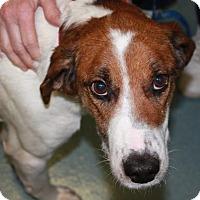 Adopt A Pet :: Thurston - Richmond, VA