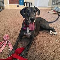 Adopt A Pet :: Moosey - Mesa, AZ