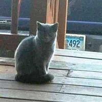 Adopt A Pet :: Smokey - Putnam, CT