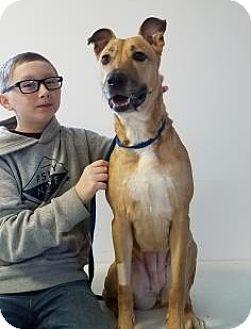 Shepherd (Unknown Type) Mix Dog for adoption in Elyria, Ohio - Luka-Prison Graduate