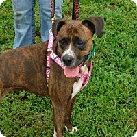 Boxer Mix Dog for adoption in Zanesville, Ohio - 50896 Cell Dog Lulu