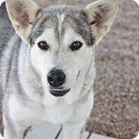 Adopt A Pet :: Abeline - Hooksett, NH