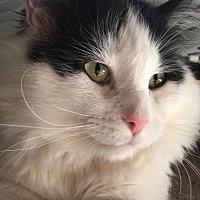 Adopt A Pet :: Charlie Parker - Edmonton, AB