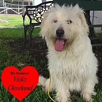Tibetan Terrier/Mixed Breed (Medium) Mix Dog for adoption in San Leon, Texas - Everest