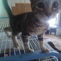 Adopt A Pet :: Ione - Centerton, AR