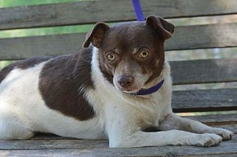 Terrier (Unknown Type, Medium) Mix Dog for adoption in Vacaville, California - Odin