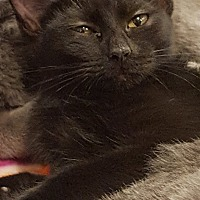 Adopt A Pet :: Apple Jack - Bensalem, PA