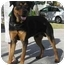 Photo 2 - Rottweiler Dog for adoption in Boca Raton, Florida - Mickey