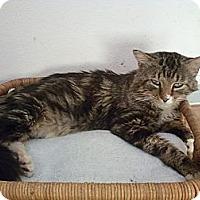 Adopt A Pet :: Leo - Bunnell, FL