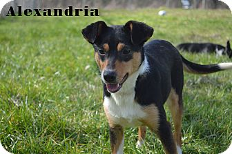 Terrier (Unknown Type, Medium) Mix Dog for adoption in Texarkana, Arkansas - Alexandria