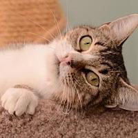 Adopt A Pet :: Shania - Baton Rouge, LA