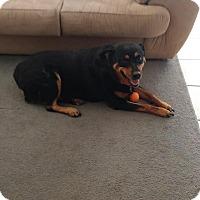 Adopt A Pet :: Skye - Gilbert, AZ