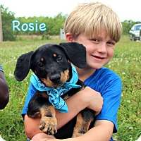 Adopt A Pet :: Rosie - South Dennis, MA