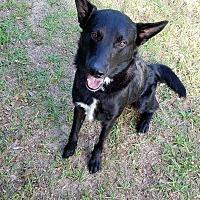 Adopt A Pet :: Freddy - Ozark, AL