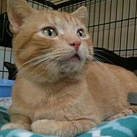 Adopt A Pet :: Wilbur - Ashtabula, OH