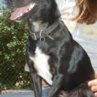 Adopt A Pet :: Squirt - Fresno, CA