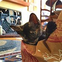 Adopt A Pet :: Quinn 2017 - Orlando, FL