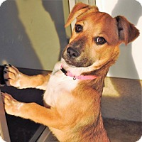 Adopt A Pet :: Millie - Green Bay, WI