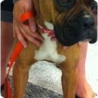Adopt A Pet :: Piper - Oceanside, CA