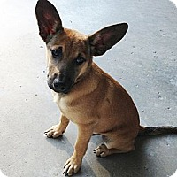 Adopt A Pet :: Trouble - CHESTERFIELD, MI