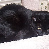 Adopt A Pet :: MingChow - Gray, TN