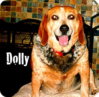 Beagle Mix Dog for adoption in Columbia Heights, Minnesota - Dolly
