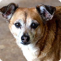 Adopt A Pet :: Biscuit - Kempner, TX