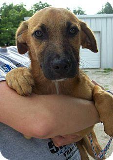 Hound (Unknown Type)/Dachshund Mix Dog for adoption in Von Ormy, Texas - Davie