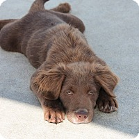 Adopt A Pet :: *Gabe - PENDING - Westport, CT