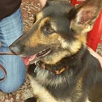 German Shepherd Dog Mix Dog for adoption in Scottsdale, Arizona - Brooke