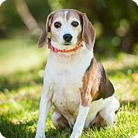 Adopt A Pet :: SISSY - Coudersport, PA