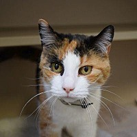 Adopt A Pet :: Snickers - Denver, CO