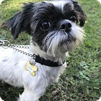 Adopt A Pet :: BOGEY - Los Angeles, CA