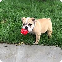 Adopt A Pet :: Rocco - Columbus, OH