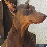 Adopt A Pet :: Zander - Tracy, CA