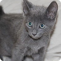 Adopt A Pet :: Grayson - tampa, FL