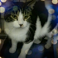Adopt A Pet :: Pinky - Trevose, PA