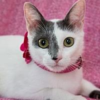 Adopt A Pet :: Cheri - Fort Lauderdale, FL