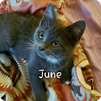 Adopt A Pet :: June - Painted Post, NY