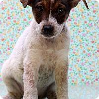 Adopt A Pet :: Shiloh - Waldorf, MD