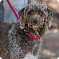 Adopt A Pet :: Roark - Kanab, UT