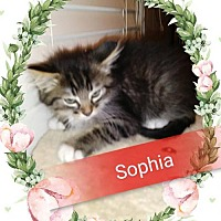 Adopt A Pet :: Sophia - San Bernardino, CA