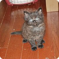 Adopt A Pet :: Cinder - Armuchee, GA