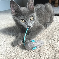 Adopt A Pet :: Momo - Rochester Hills, MI