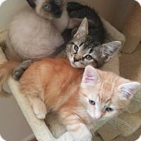 Adopt A Pet :: Wolverine - Westland, MI